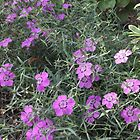 Purple Flowers in the Grass by Lunatasha