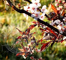 Orchard web by valdez
