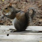 Squirrel having lunch by Patricia Mills
