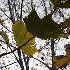 Winter Green by Joanne Piechota