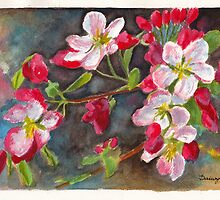 Apple Blossom 2 by Dai Wynn