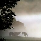 Horses through the mist by Cat Perkinton