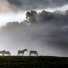 Dawn Mists by Cat Perkinton