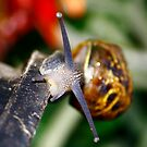 Snail on Collision Course by Guyzimij