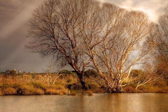 Pompoota Winter, Murraylands, SA, Australia