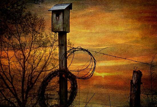 Blue Bird House and Barbed Wire by Christine Annas