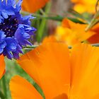 Blue and Orange Summer  by Linda Dilbeck