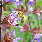 Sage and Bee by Linda Dilbeck