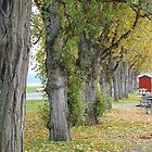 Autumn Tree Row by Linda Dilbeck