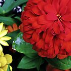 Red Zinnia by JennsTreasures