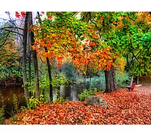 Autumn At The Spirit Of The Woods Photographic Print