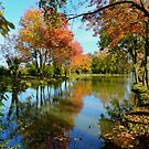 Autumn pond by Amy Herrfurth