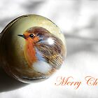 Little Robin Red breast by Rob Fenn