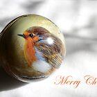 Little Robin Red breast by Rob Fenn