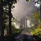 Autumn Morning Peebles 2012 1 by photobymdavey