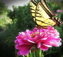 Flower and Butterfly by gmnick
