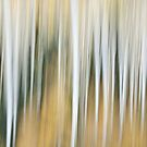 Ghost Forest along Owl Creek Pass Road by rjcolby