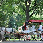 Horse Carriage in Central Park, New York, NY by Tedd Wenrick
