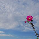 hollyhock by davvi