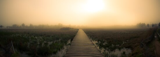 Morning Fog by Shari Mattox