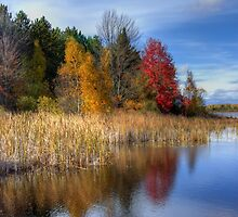 Autumn Wetlands by Megan Noble