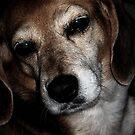 Sad Face by Darlene Bayne
