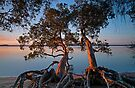 Two Tumbled Trees @ Twilight by bazcelt