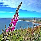 Fox Glove on the lookout.. by Wonkstar