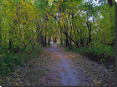 Tree Covered Path by winnipegmike