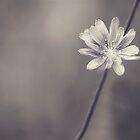Simplicity by Sazzyshortness