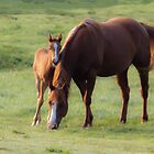 Mare and Colt by michelsoucy