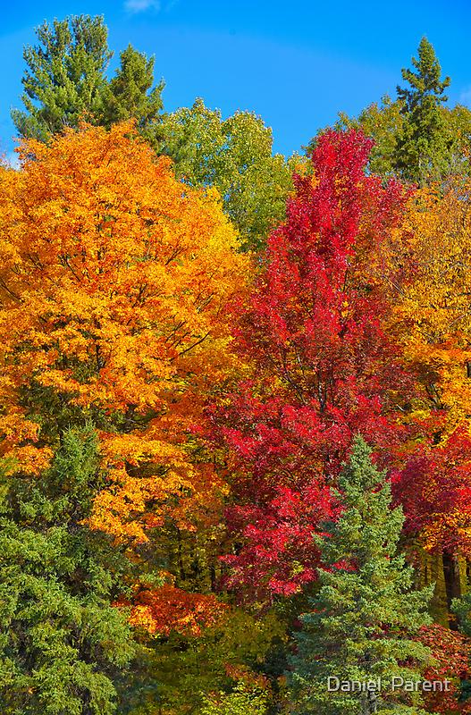 Gatineau Park Colourburst by Daniel  Parent