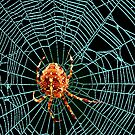 Blue Spider Web by Marvin Hayes