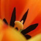 Hide behind my fan petal by Onehun