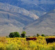 Happy Cows by marilyn diaz