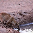 Waterhole by JessicaHayley