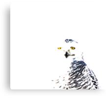 Snowy Owl on White Canvas Print