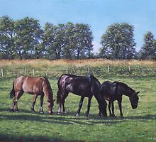 three horses in field by martyee