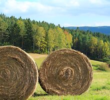 In the Ore Mountains by karina5