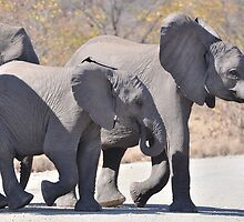 Elephants by jeff97