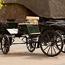 Shire Horse and cart by Imager