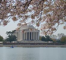 DC Cherry Blossoms by Loveinidleness