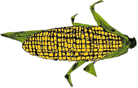 Corn by Daniel Gallegos