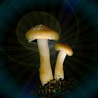 Magic Mushrooms by Marvin Hayes