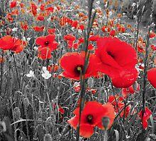 Full of Poppies by Steven  Van Gucht