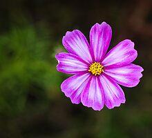 Pink   by Karen Havenaar