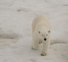 Svalbard by Mark Prior