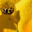 Yellow Beetle on Celendine by AnnDixon