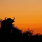 Sunset Buffalo by PBreedveld