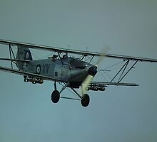 Hawker Hind(Afghan) by Andy Jordan